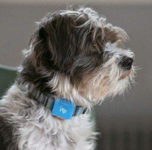 Маячок-ошейник с GPS для собак